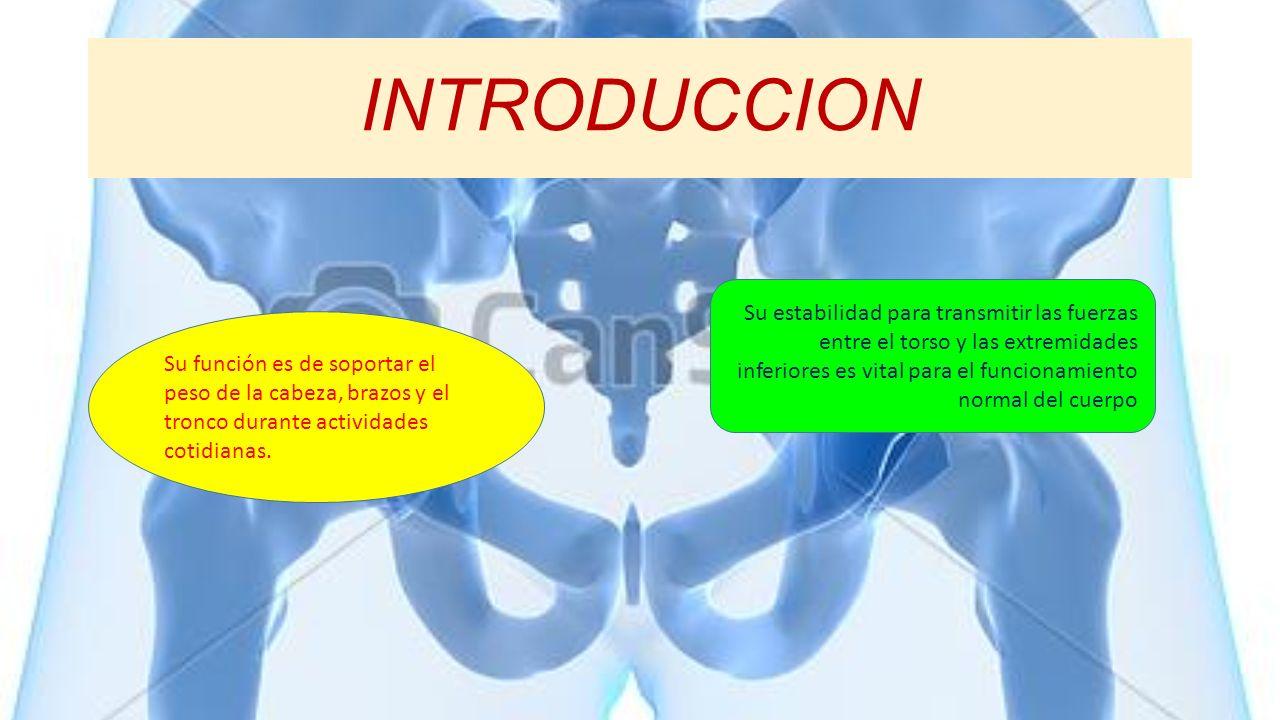INTRODUCCION Su estabilidad para transmitir las fuerzas entre el torso y las extremidades inferiores es vital para el funcionamiento normal del cuerpo