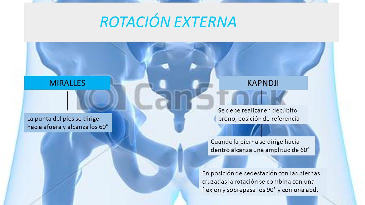ROTACIÓN EXTERNA MIRALLES La punta del pies se dirige hacia afuera y alcanza los 60° KAPNDJI Cuando la pierna se dirige hacia dentro alcanza una ampli