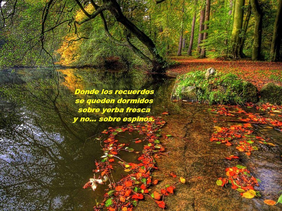 Donde nazcan flores, donde broten pinos, donde los deseos se vean cumplidos.