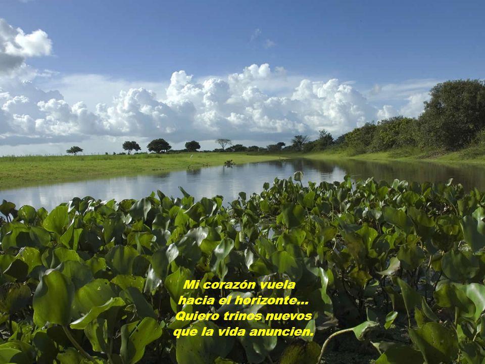 Naturaleza viva de colores llena Que mis pies se mojen con el agua nueva.