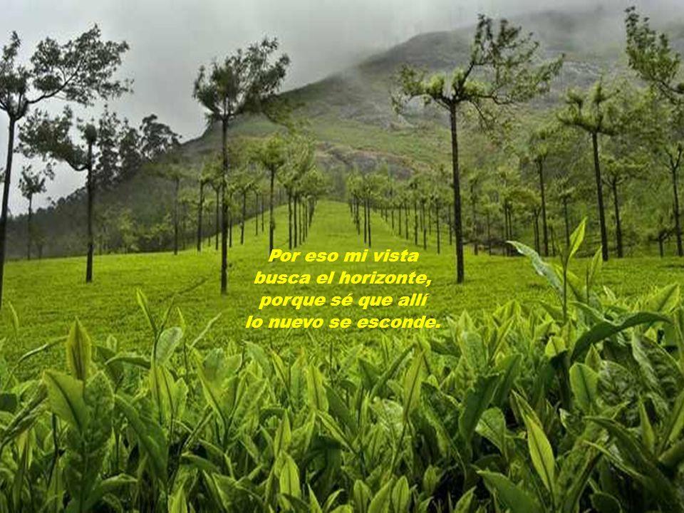 No quiero pisar éste campo viejo que hiere mis plantas, que hiere mi alma…