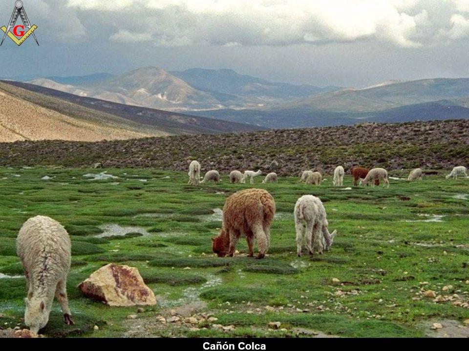 Colca - Arequipa