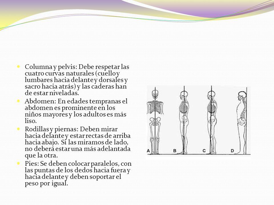 Columna y pelvis: Debe respetar las cuatro curvas naturales (cuello y lumbares hacia delante y dorsales y sacro hacia atrás) y las caderas han de estar niveladas.