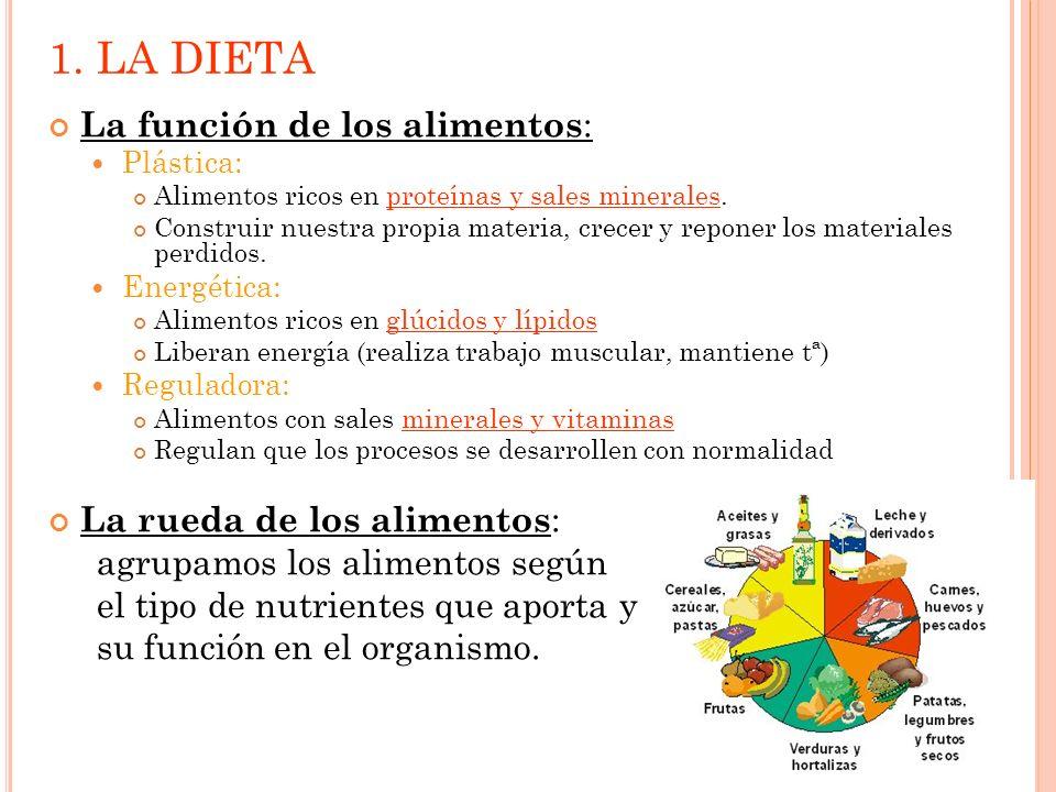 1. LA DIETA La función de los alimentos : Plástica: Alimentos ricos en proteínas y sales minerales. Construir nuestra propia materia, crecer y reponer