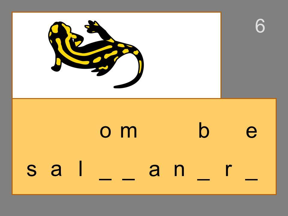s a _ __ l on a n _ r_ b e 6