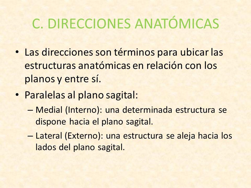 Magnífico Términos De Anatomía Y Definiciones Imágenes - Imágenes de ...