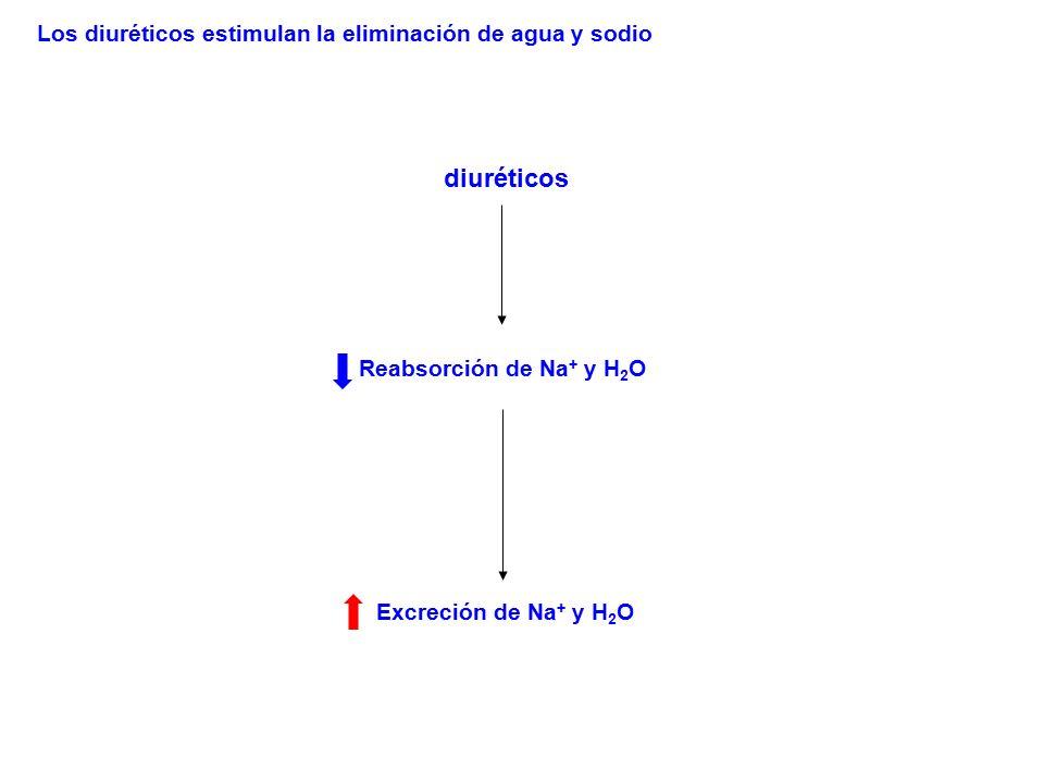 diuréticos Reabsorción de Na + y H 2 O Excreción de Na + y H 2 O Los diuréticos estimulan la eliminación de agua y sodio
