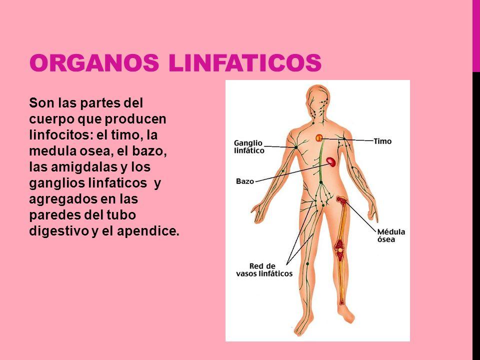 Sistema Linfático Fabiana Fernández. - ppt video online descargar
