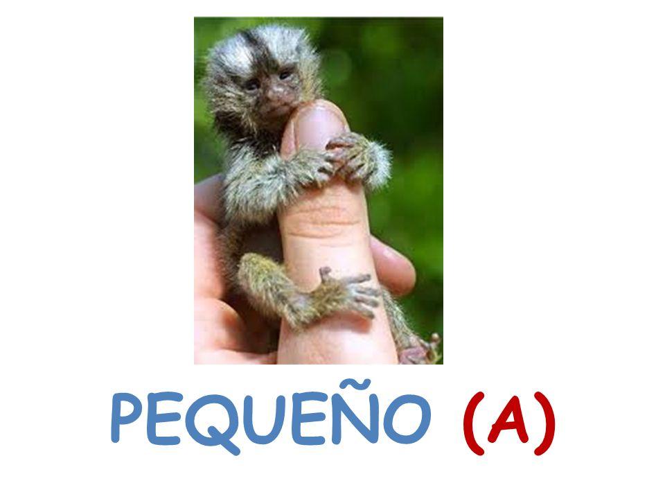 PEQUEÑO (A)