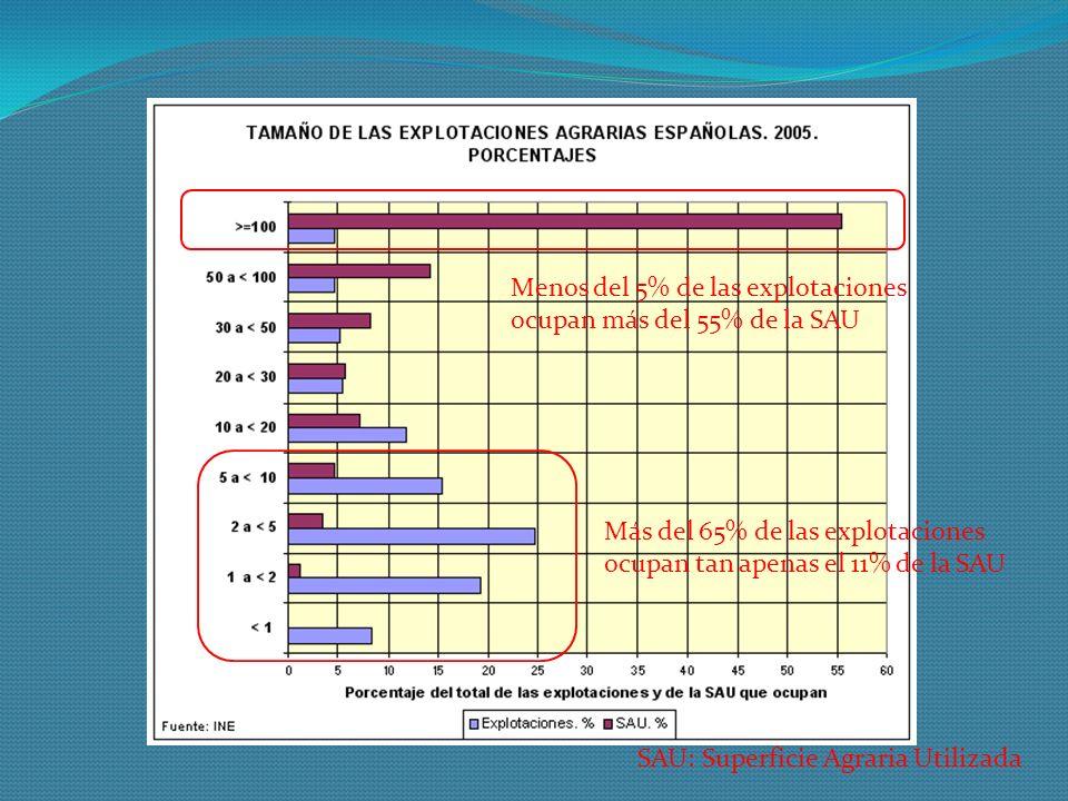 SAU: Superficie Agraria Utilizada Más del 65% de las explotaciones ocupan tan apenas el 11% de la SAU Menos del 5% de las explotaciones ocupan más del 55% de la SAU