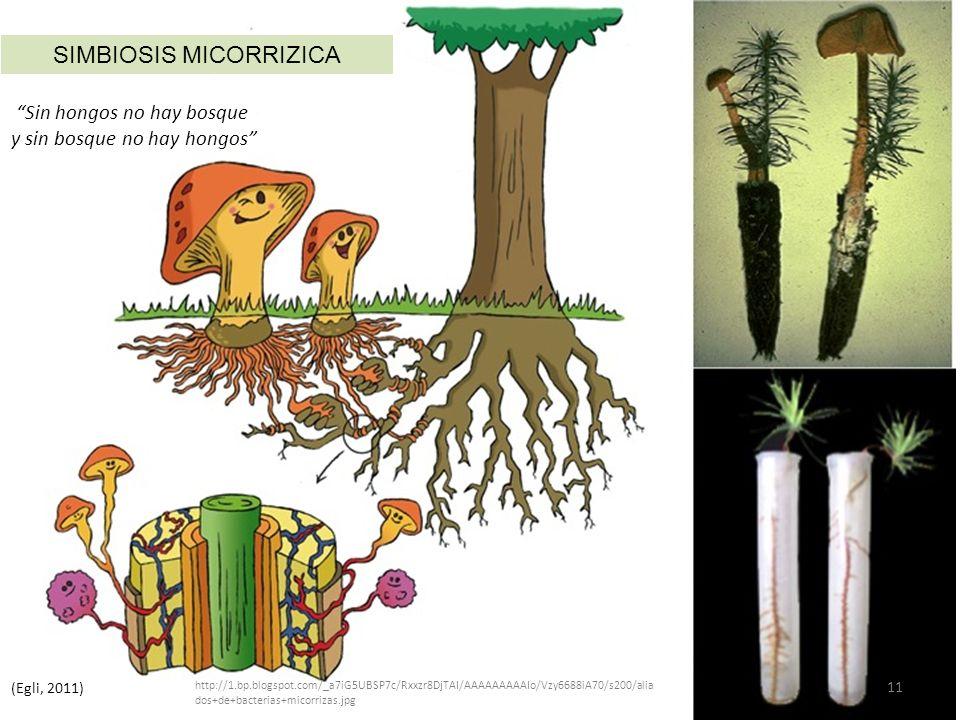 SIMBIOSIS MICORRIZICA Sin hongos no hay bosque y sin bosque no hay hongos (Egli, 2011) http://1.bp.blogspot.com/_a7iG5UBSP7c/Rxxzr8DjTAI/AAAAAAAAAIo/Vzy6688iA70/s200/alia dos+de+bacterias+micorrizas.jpg 11