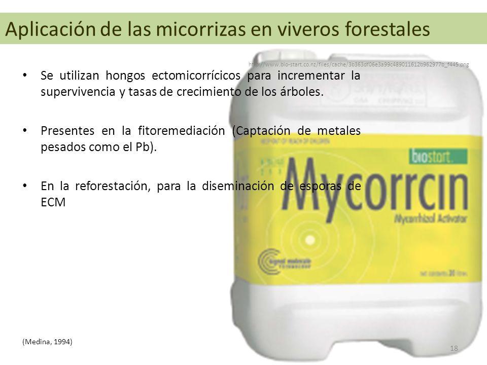 Aplicación de las micorrizas en viveros forestales Se utilizan hongos ectomicorrícicos para incrementar la supervivencia y tasas de crecimiento de los