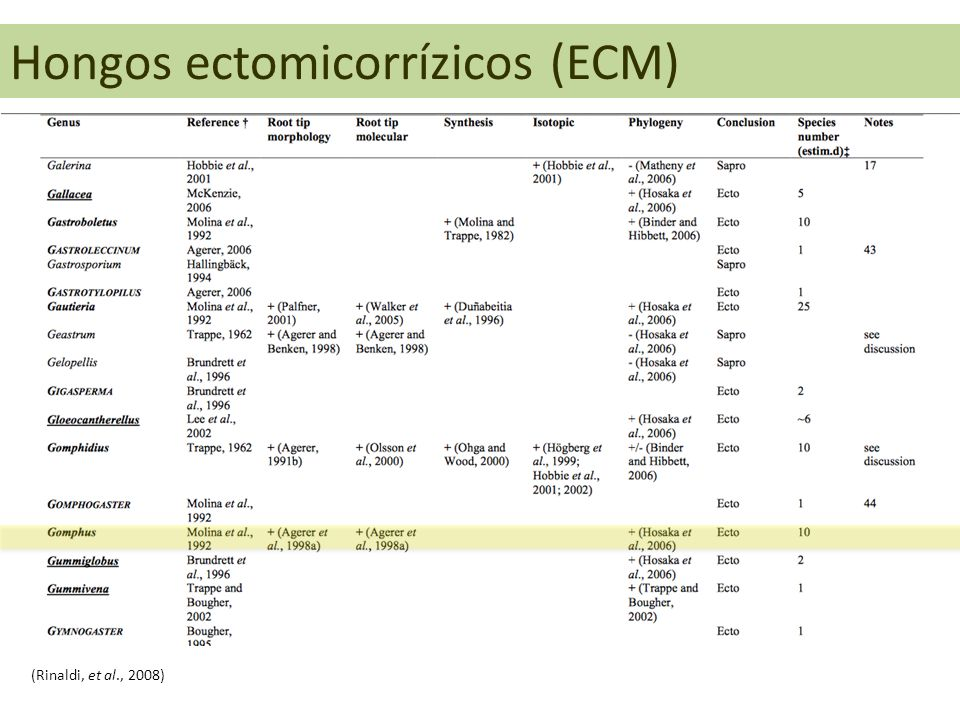 Hongos ectomicorrízicos (ECM) (Rinaldi, et al., 2008)