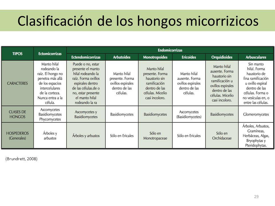 Clasificación de los hongos micorrizicos (Brundrett, 2008) 29
