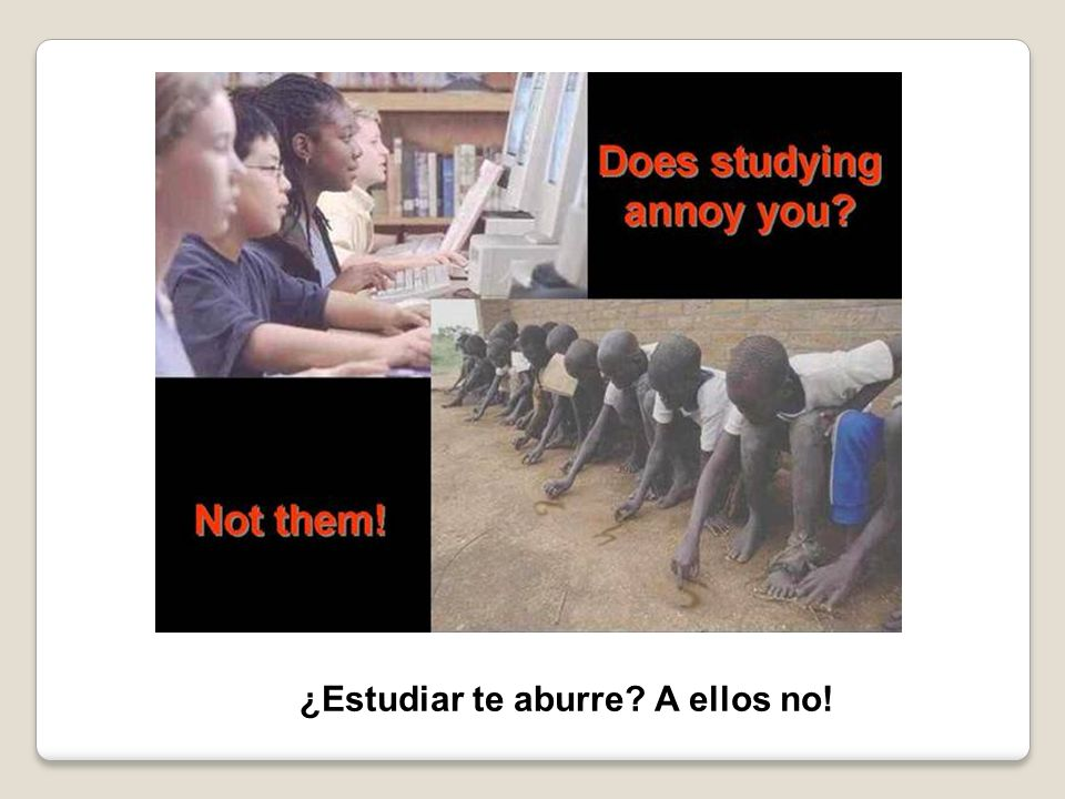 ¿Estudiar te aburre? A ellos no!