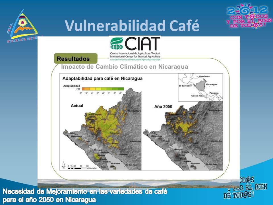 Vulnerabilidad Café