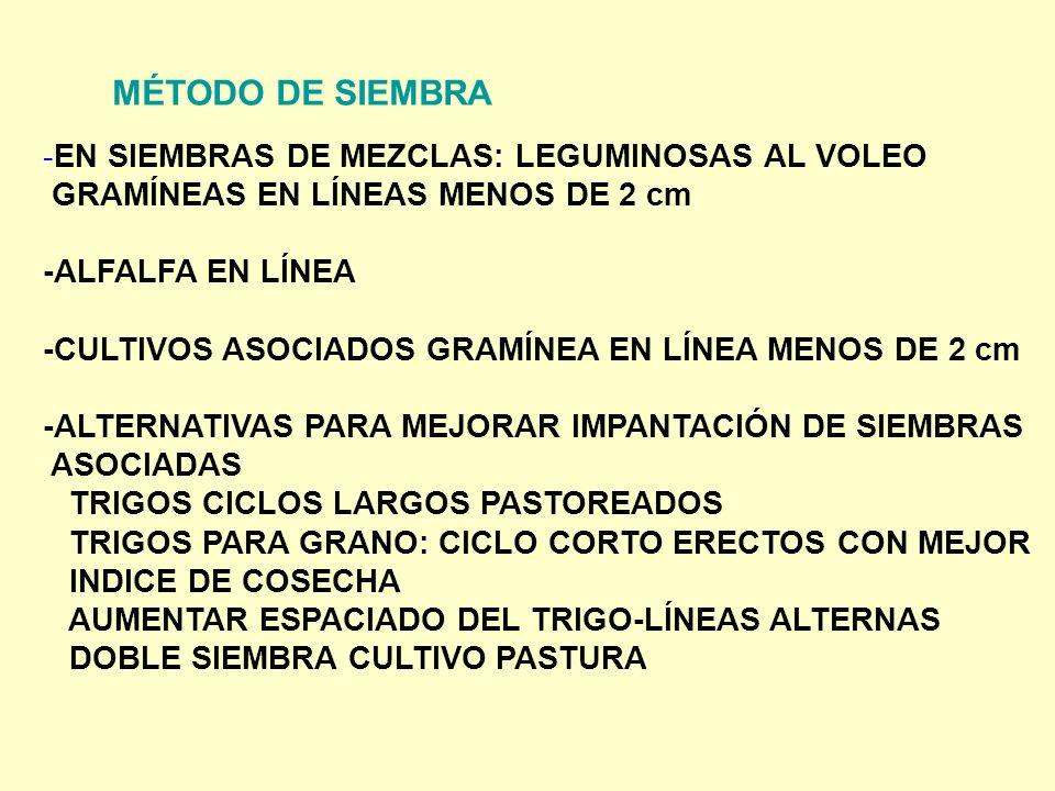 MÉTODO DE SIEMBRA -EN SIEMBRAS DE MEZCLAS: LEGUMINOSAS AL VOLEO GRAMÍNEAS EN LÍNEAS MENOS DE 2 cm -ALFALFA EN LÍNEA -CULTIVOS ASOCIADOS GRAMÍNEA EN LÍ