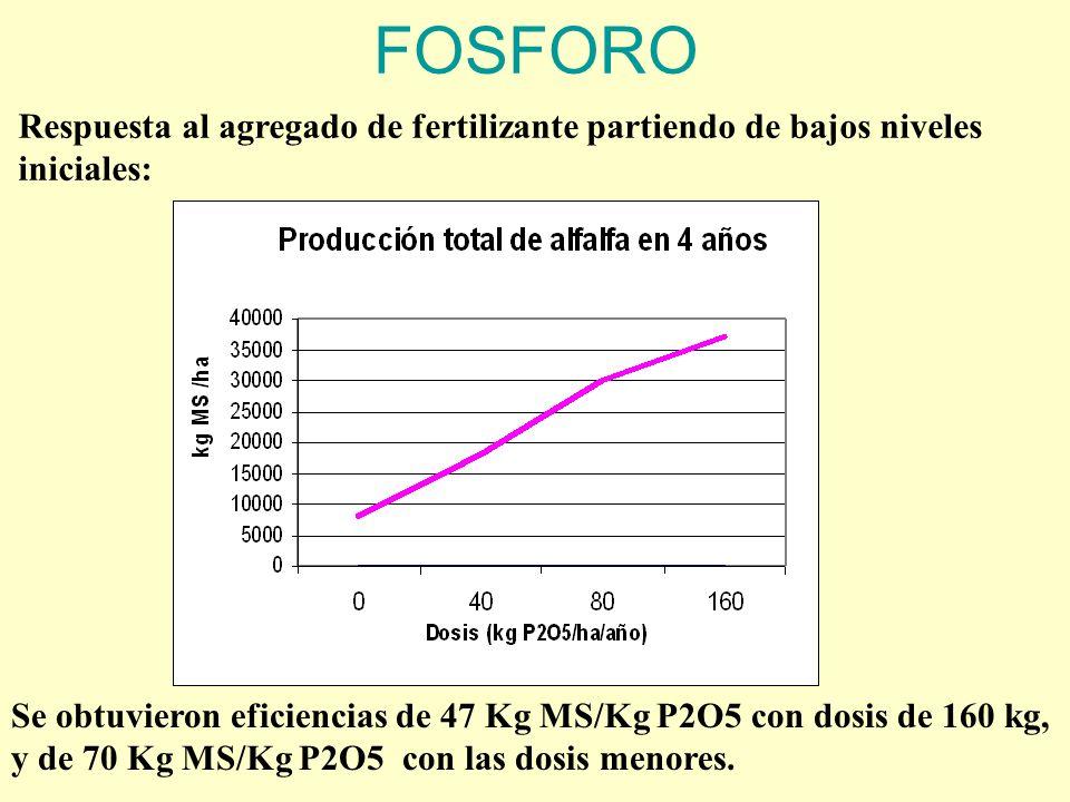 FOSFORO Respuesta al agregado de fertilizante partiendo de bajos niveles iniciales: Se obtuvieron eficiencias de 47 Kg MS/Kg P2O5 con dosis de 160 kg, y de 70 Kg MS/Kg P2O5 con las dosis menores.