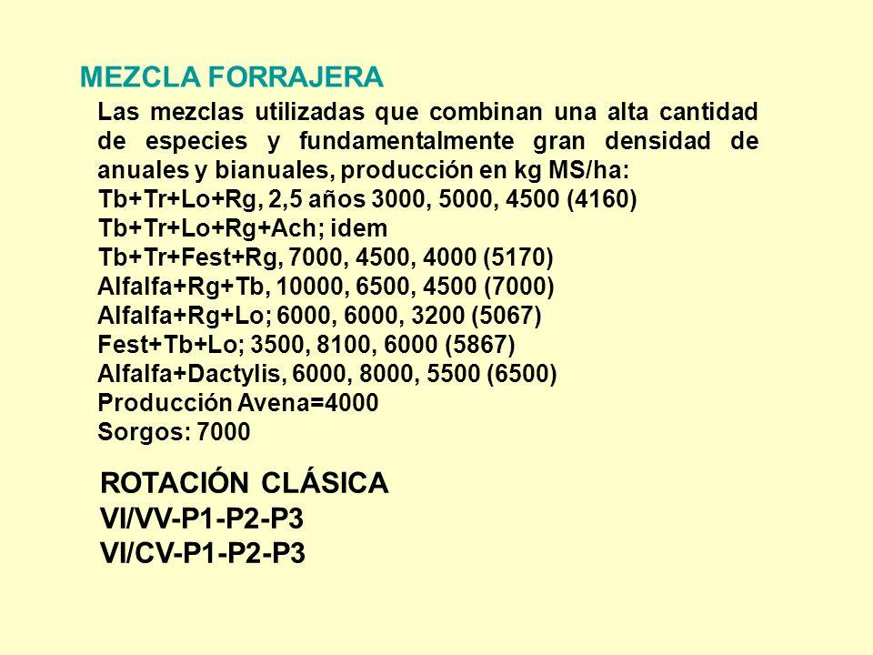 MEZCLA FORRAJERA Las mezclas utilizadas que combinan una alta cantidad de especies y fundamentalmente gran densidad de anuales y bianuales, producción en kg MS/ha: Tb+Tr+Lo+Rg, 2,5 años 3000, 5000, 4500 (4160) Tb+Tr+Lo+Rg+Ach; idem Tb+Tr+Fest+Rg, 7000, 4500, 4000 (5170) Alfalfa+Rg+Tb, 10000, 6500, 4500 (7000) Alfalfa+Rg+Lo; 6000, 6000, 3200 (5067) Fest+Tb+Lo; 3500, 8100, 6000 (5867) Alfalfa+Dactylis, 6000, 8000, 5500 (6500) Producción Avena=4000 Sorgos: 7000 ROTACIÓN CLÁSICA VI/VV-P1-P2-P3 VI/CV-P1-P2-P3