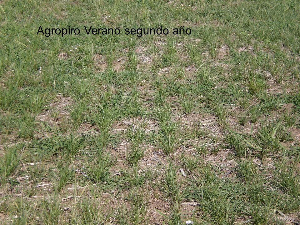 Agropiro Verano segundo año