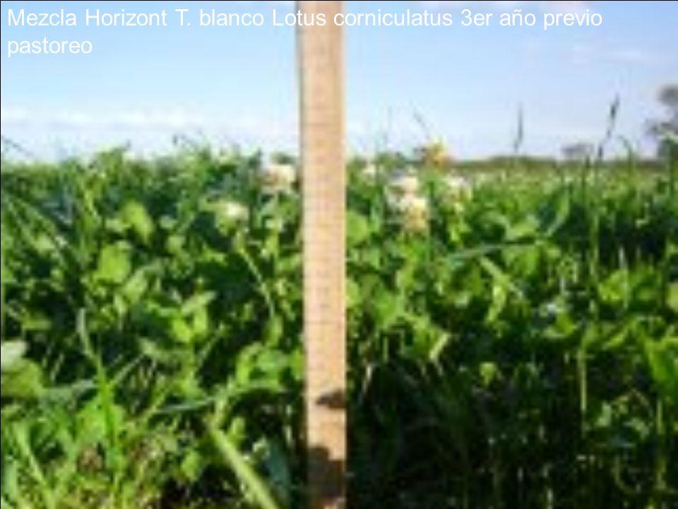 Mezcla Horizont T. blanco Lotus corniculatus 3er año previo pastoreo