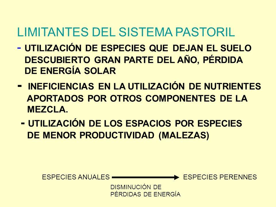 LIMITANTES DEL SISTEMA PASTORIL - UTILIZACIÓN DE ESPECIES QUE DEJAN EL SUELO DESCUBIERTO GRAN PARTE DEL AÑO, PÉRDIDA DE ENERGÍA SOLAR - INEFICIENCIAS