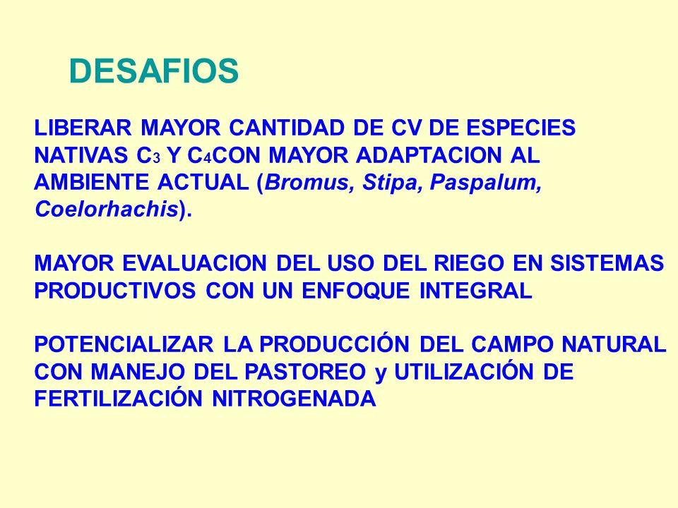 DESAFIOS LIBERAR MAYOR CANTIDAD DE CV DE ESPECIES NATIVAS C 3 Y C 4 CON MAYOR ADAPTACION AL AMBIENTE ACTUAL (Bromus, Stipa, Paspalum, Coelorhachis).