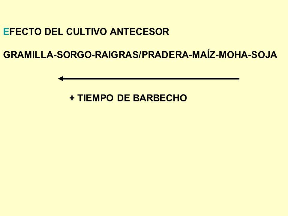 EFECTO DEL CULTIVO ANTECESOR GRAMILLA-SORGO-RAIGRAS/PRADERA-MAÍZ-MOHA-SOJA + TIEMPO DE BARBECHO