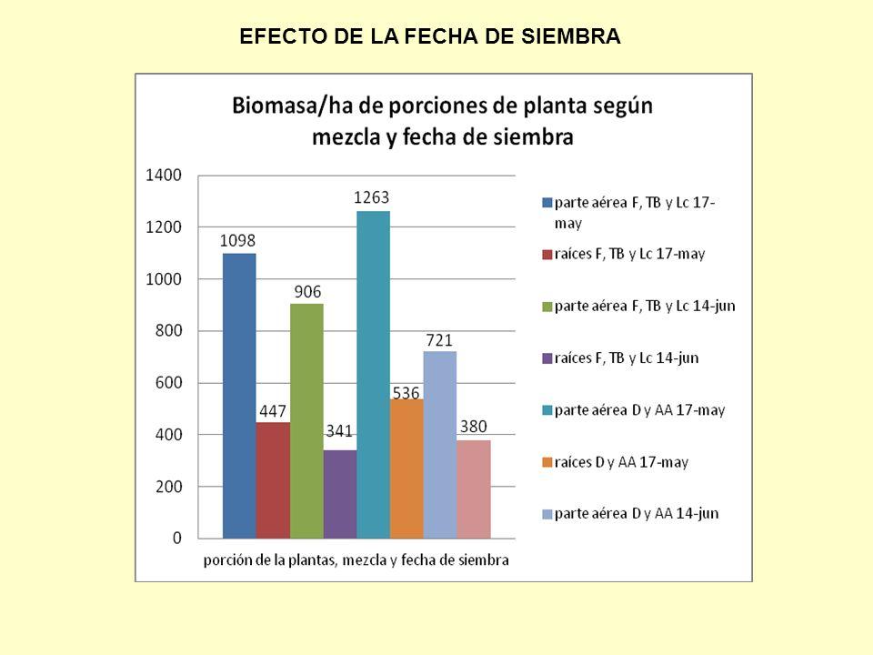 EFECTO DE LA FECHA DE SIEMBRA