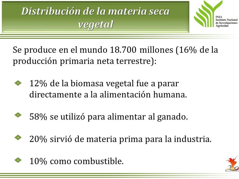 Se produce en el mundo 18.700 millones (16% de la producción primaria neta terrestre): 12% de la biomasa vegetal fue a parar directamente a la aliment