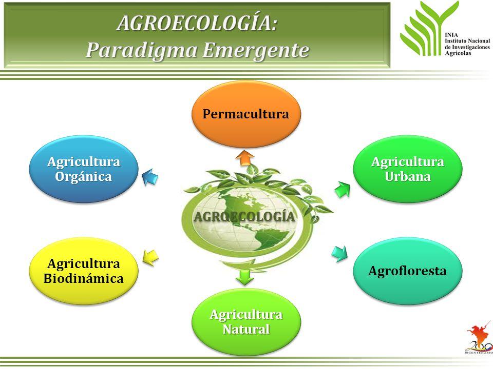 Permacultura Agricultura Urbana Agrofloresta Agricultura Natural Agricultura Biodinámica Agricultura Orgánica AGROECOLOGÍAAGROECOLOGÍA