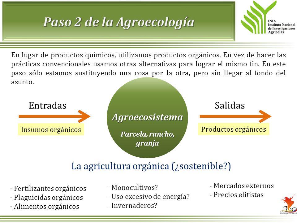 En lugar de productos químicos, utilizamos productos orgánicos. En vez de hacer las prácticas convencionales usamos otras alternativas para lograr el