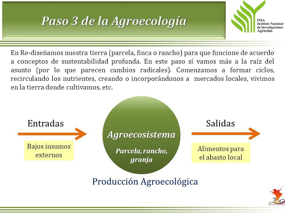 En Re-diseñamos nuestra tierra (parcela, finca o rancho) para que funcione de acuerdo a conceptos de sustentabilidad profunda. En este paso sí vamos m