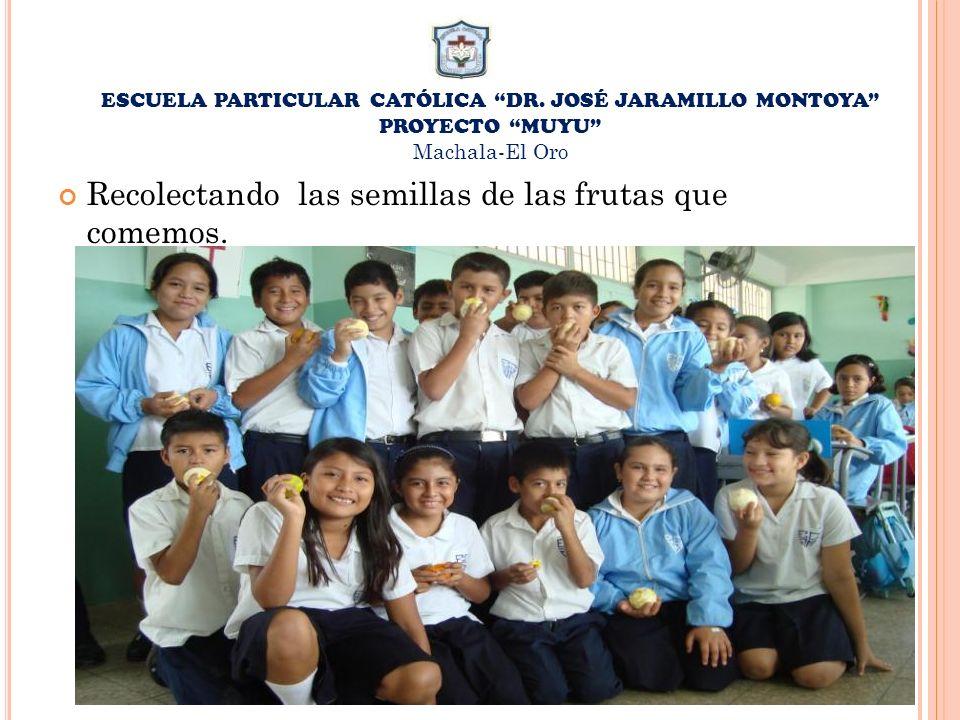 ESCUELA PARTICULAR CATÓLICA DR. JOSÉ JARAMILLO MONTOYA PROYECTO MUYU Machala-El Oro Recolectando las semillas de las frutas que comemos.