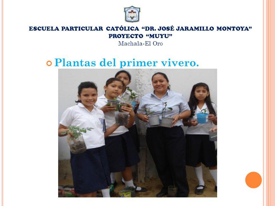 ESCUELA PARTICULAR CATÓLICA DR. JOSÉ JARAMILLO MONTOYA PROYECTO MUYU Machala-El Oro Plantas del primer vivero.