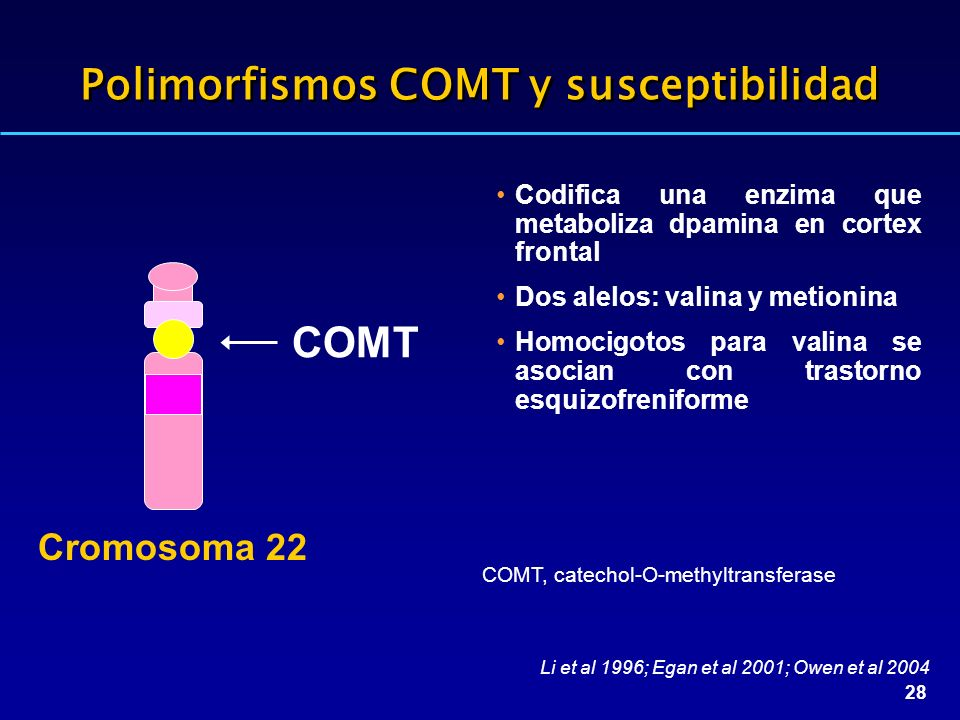 28 Polimorfismos COMT y susceptibilidad Codifica una enzima que metaboliza dpamina en cortex frontal Dos alelos: valina y metionina Homocigotos para valina se asocian con trastorno esquizofreniforme COMT Cromosoma 22 Li et al 1996; Egan et al 2001; Owen et al 2004 COMT, catechol-O-methyltransferase