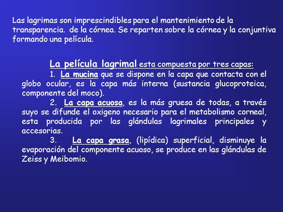 La película lagrimal esta compuesta por tres capas: 1. La mucina que se dispone en la capa que contacta con el globo ocular, es la capa más interna (s