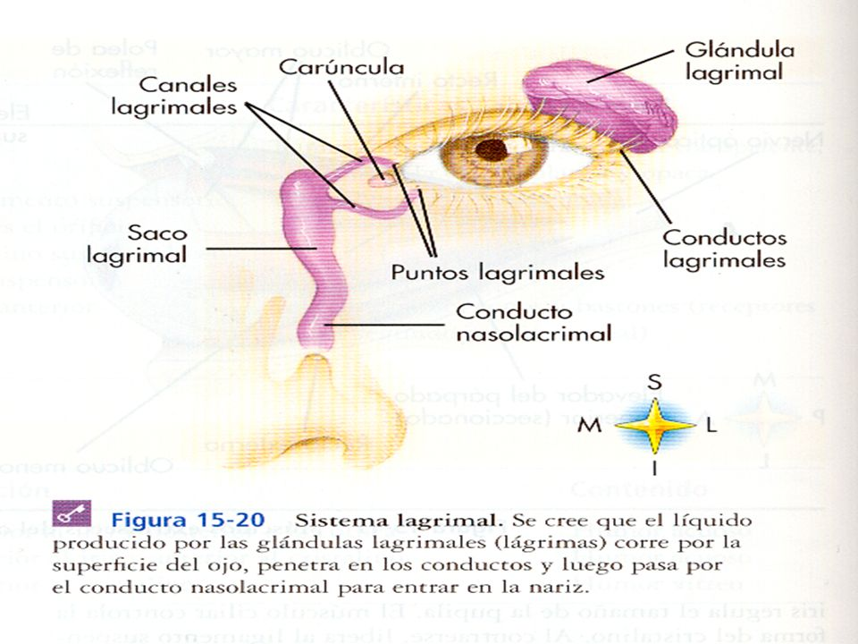 Crónica: Es la inflamación crónica del saco y de los canalículos lagrimales, cursa con epífora y sin signos inflamatorios.