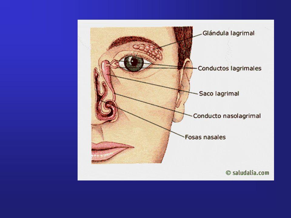 FUNCIONES DE LA LAGRIMA: - Óptica: proporciona a la córnea una superficie uniforme, la película precorneal.