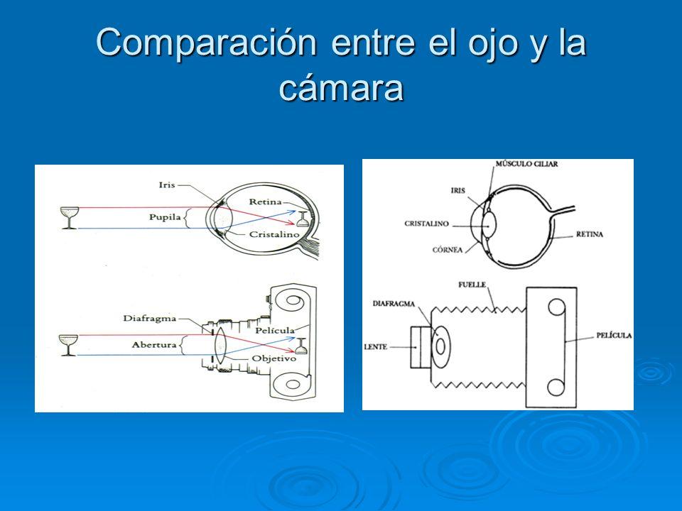 Comparación entre el ojo y la cámara
