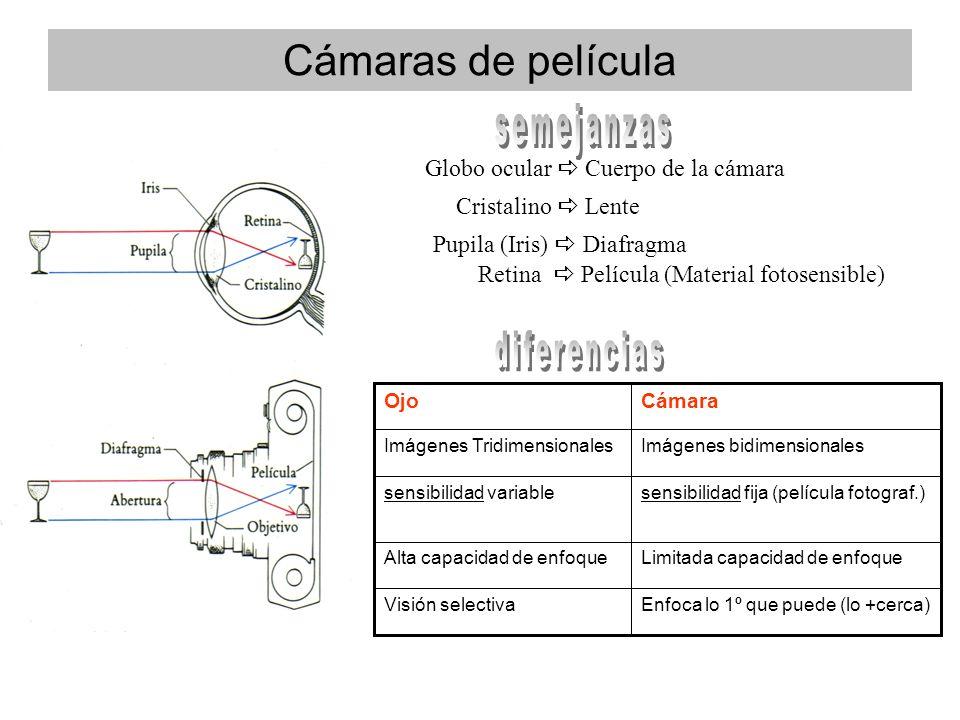 Cámaras de película Globo ocular Cuerpo de la cámara Pupila (Iris) Diafragma Cristalino Lente Retina Película (Material fotosensible) Enfoca lo 1º que puede (lo +cerca)Visión selectiva Limitada capacidad de enfoqueAlta capacidad de enfoque sensibilidad fija (película fotograf.)sensibilidad variable Imágenes bidimensionalesImágenes Tridimensionales CámaraOjo