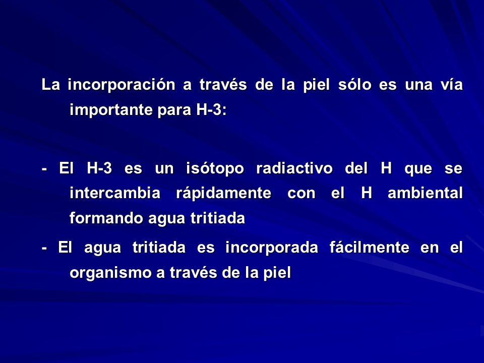 La incorporación a través de la piel sólo es una vía importante para H-3: - El H-3 es un isótopo radiactivo del H que se intercambia rápidamente con e