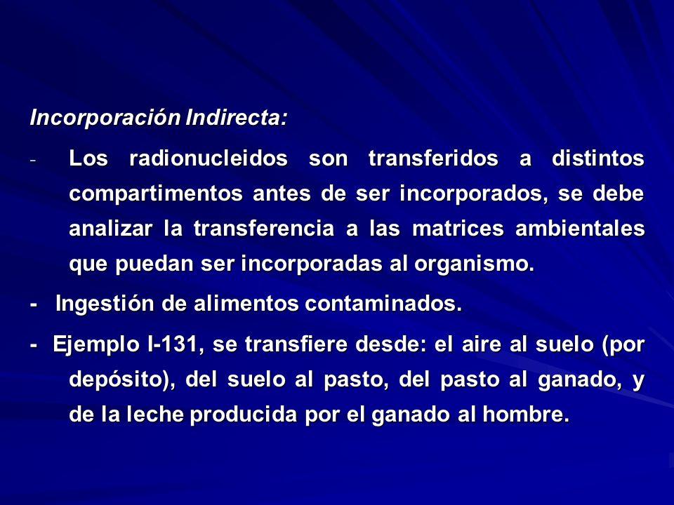 Incorporación Indirecta: - Los radionucleidos son transferidos a distintos compartimentos antes de ser incorporados, se debe analizar la transferencia