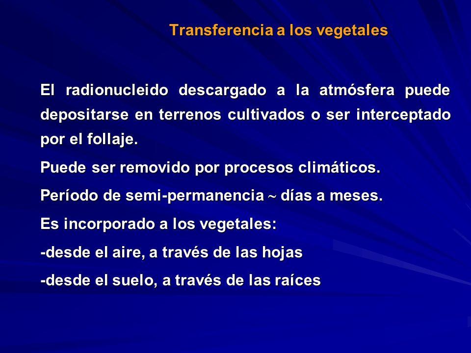 El radionucleido descargado a la atmósfera puede depositarse en terrenos cultivados o ser interceptado por el follaje. Puede ser removido por procesos