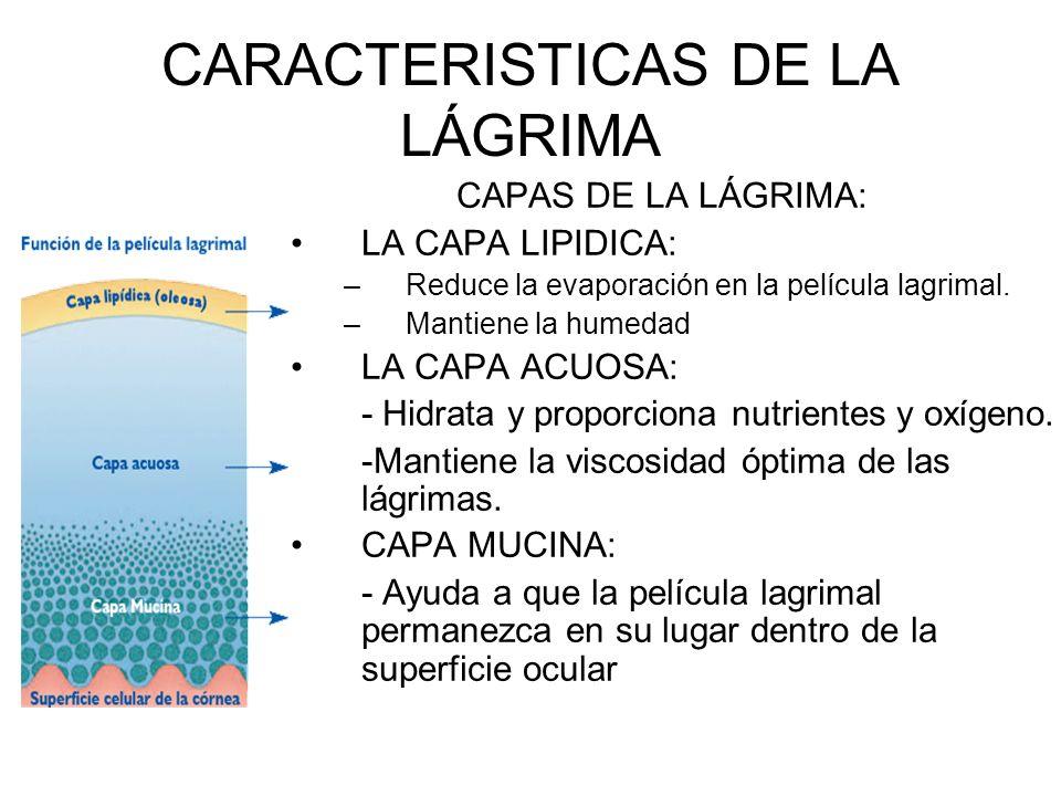 CARACTERISTICAS DE LA LÁGRIMA CAPAS DE LA LÁGRIMA: LA CAPA LIPIDICA: –Reduce la evaporación en la película lagrimal. –Mantiene la humedad LA CAPA ACUO