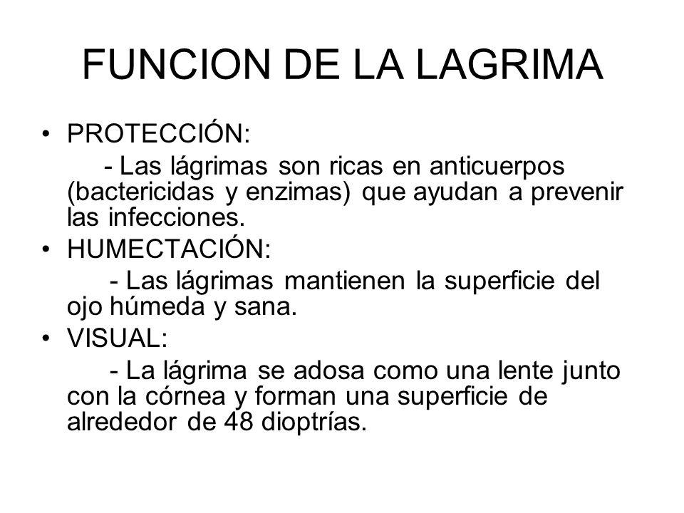 FUNCION DE LA LAGRIMA PROTECCIÓN: - Las lágrimas son ricas en anticuerpos (bactericidas y enzimas) que ayudan a prevenir las infecciones. HUMECTACIÓN: