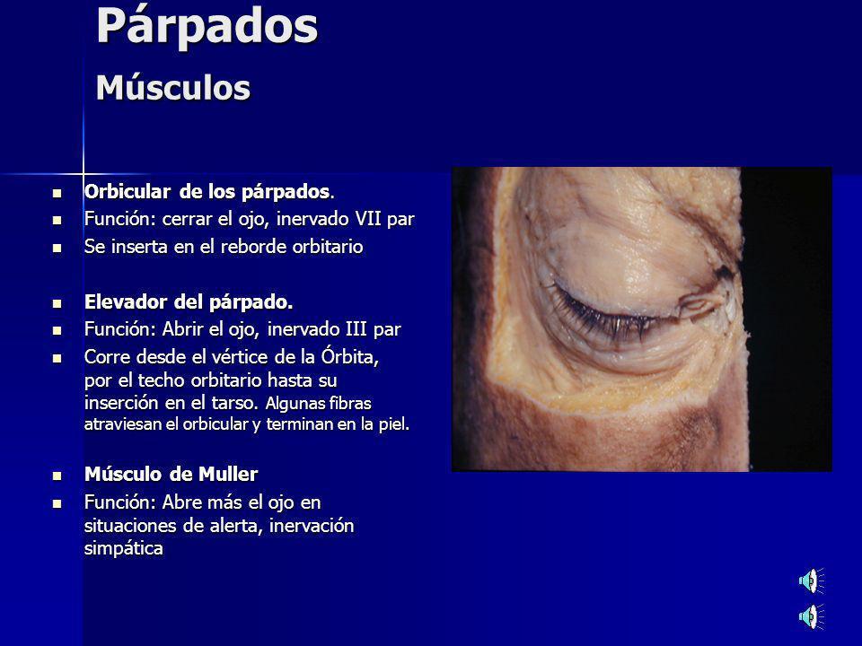 Ptosis Ptosis Adquirida Ptosis Adquirida Unilateral: Unilateral: Paresia o Parálisis del III par.
