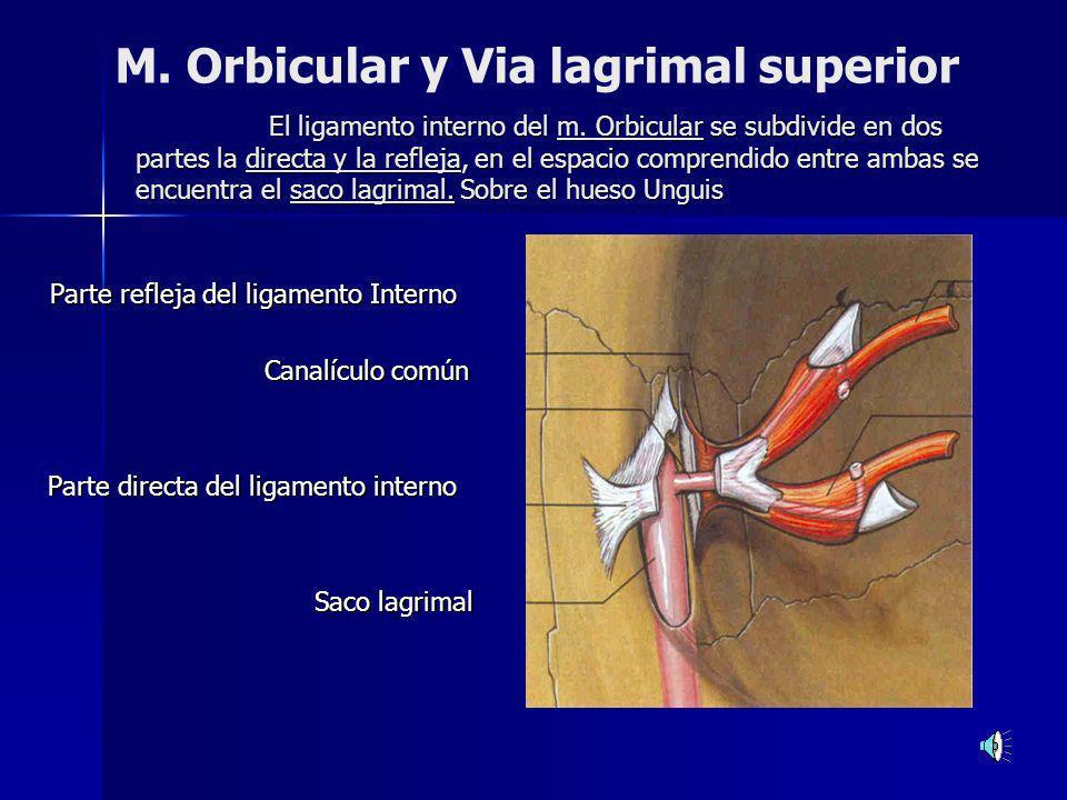 Cuerpo extraño en conjuntiva subtarsal superior Técnica de eversión del párpado, se observa el borde superior del tarso hacia abajo.