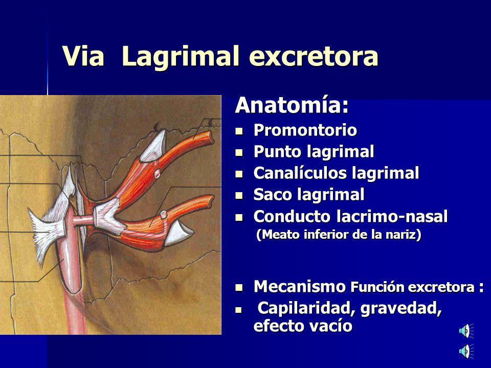 El ligamento interno del m.