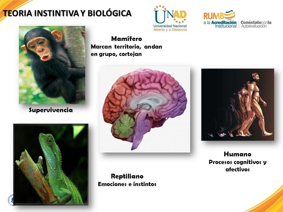 Mamífero Marcan territorio, andan en grupo, cortejan Reptiliano Emociones e instintos Humano Procesos cognitivos y afectivos Supervivencia TEORIA INST